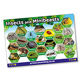 Insects & Minibeasts Poster (A2 - 620mm x 420mm)